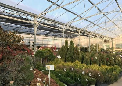 Evergreen Shrubs & Conifers in Shrubhouse