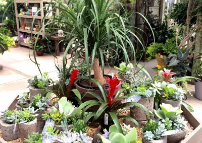 Bromeliads, Succulents & Ponytail Palm