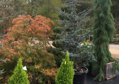 Trees and Shrubs From Oregon