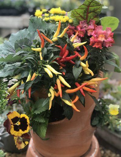 Mixed Fall Planter 2
